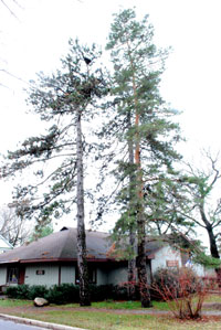 building with two pine trees is the Ann Arbor Senior Center