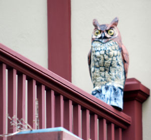 a plastic owl sitting on a porch bannister