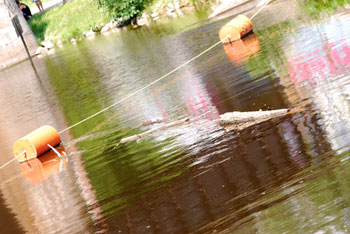 log floating in water just inside the buoy line at Argo Dam