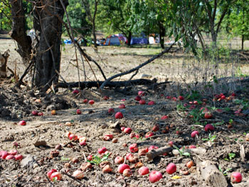 apples on ground at homeless camp