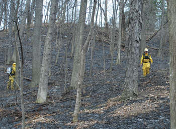 An Argo Nature Area hill after a controlled burn