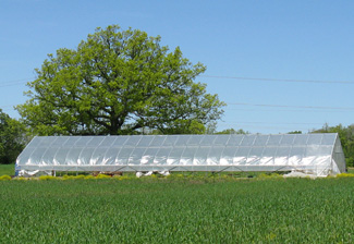A hoop house at Sunseed Farm