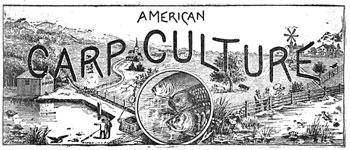 American Carp Culture